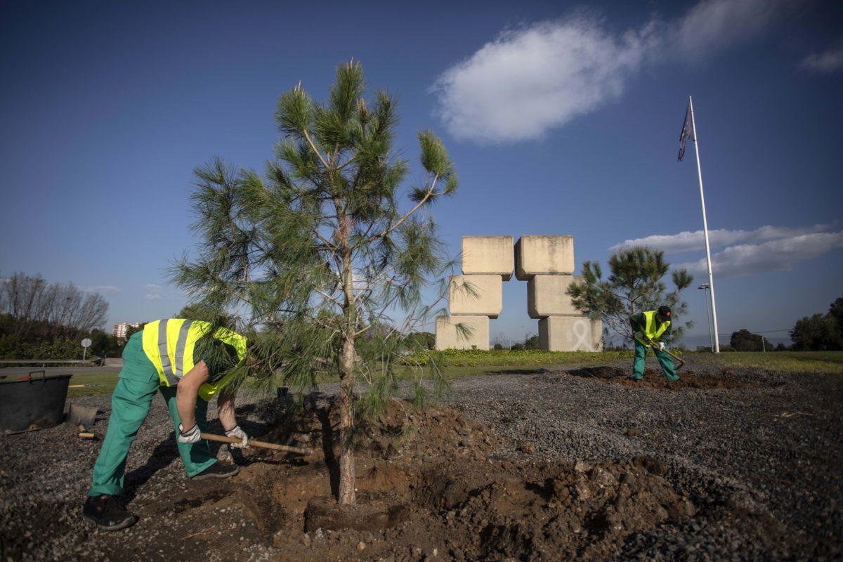 S'han replantat arbres a la plaça d'Europa
